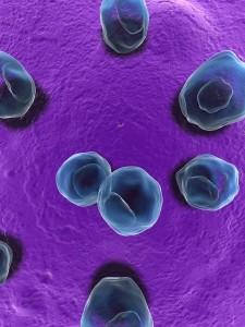 Chlamydia Bakterien - Nahaufnahme