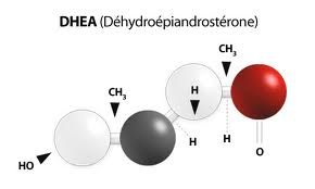 DHEA1